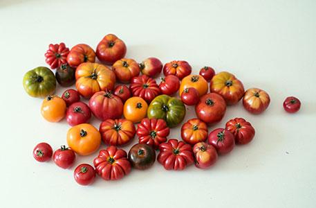 mobilekochkunst-tomate